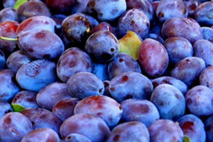 Ezt idd ősszel, ha fogyni szeretnél: szilvás smoothie csak gyümölcsből