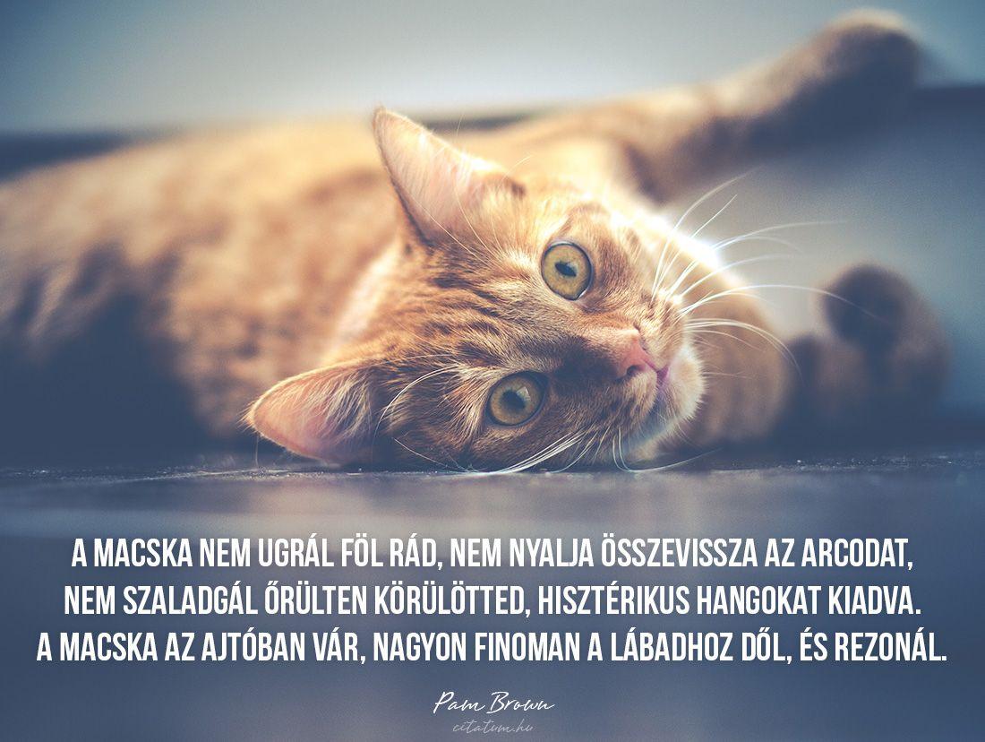 Metronidazol giardia gatos. Tételek összes - SotePedia