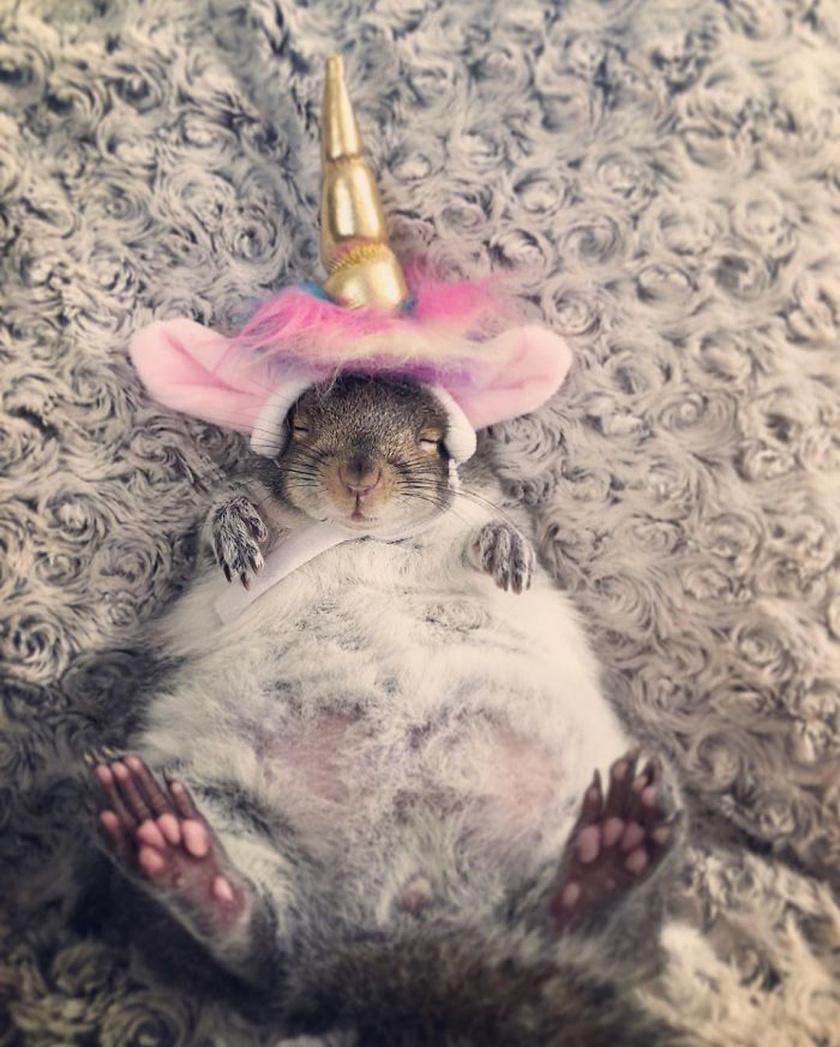 fogyás mókus karcsúsító kávé testbeszéd