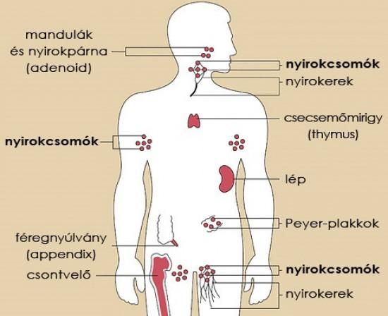 4 jel, amely limfómára utal
