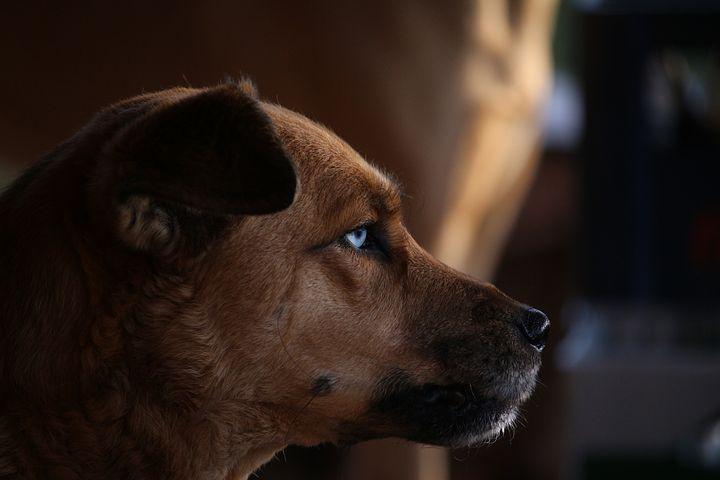 Ettől olyan csodálatos a husky kutyák szeme!