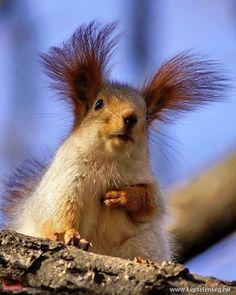 fogyás mókus lehet inni kávét, hogy lefogyjon?