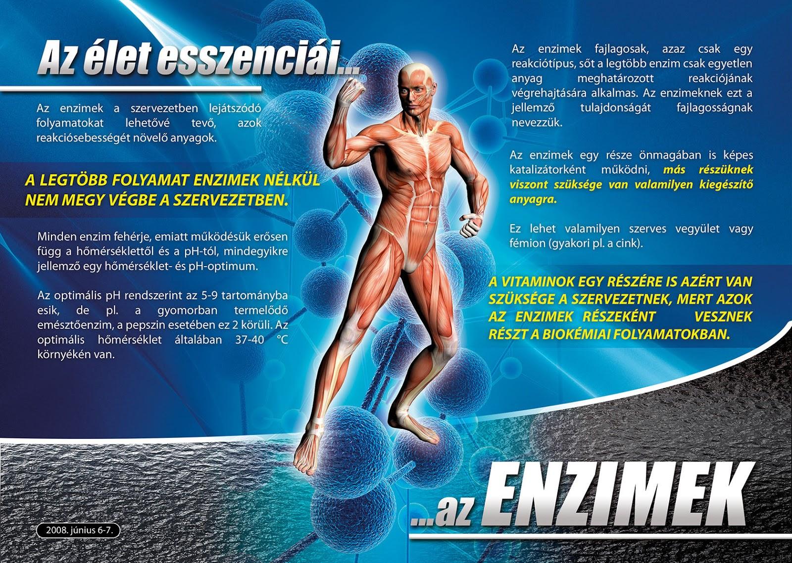 fogyás enzimek