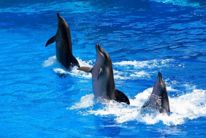 A delfinek névlistájának típusai. Delfin fekete tenger