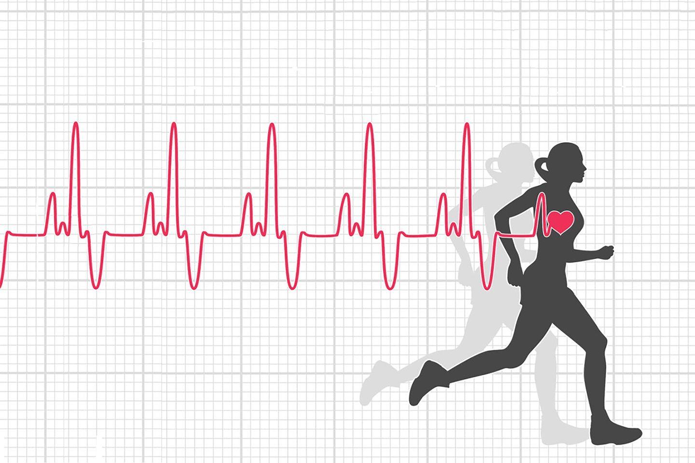 optimális pulzusszám a zsírégetéshez